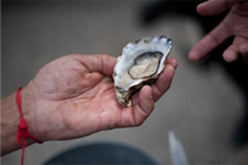 Oesterman catering cateraar oesters oester Zeeland Yerseke bedrijfsfeest beurscatering