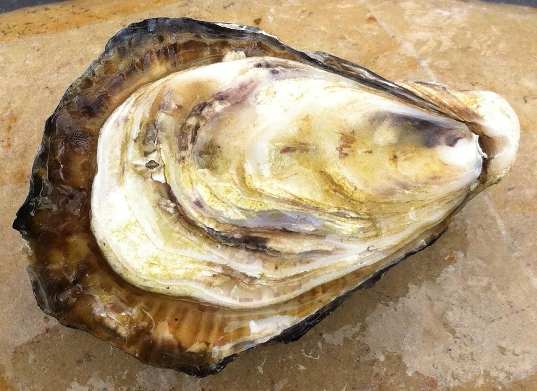 oesterman inhuren op locatie cateraar catering bedrijfsfeest kerstborrel nieuwjaarsborrel oesters